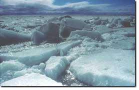 Klimawandel bedroht leben in der tundra